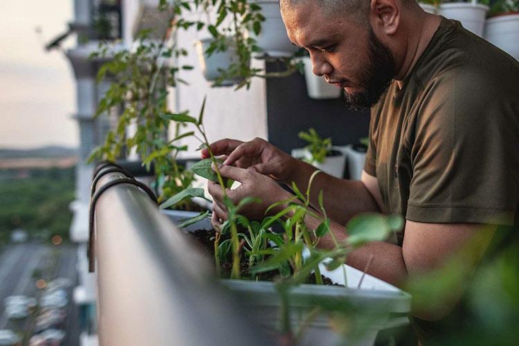 get-rid-aphids-gardening