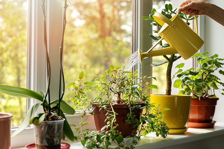 get-rid-aphids-plants-watering