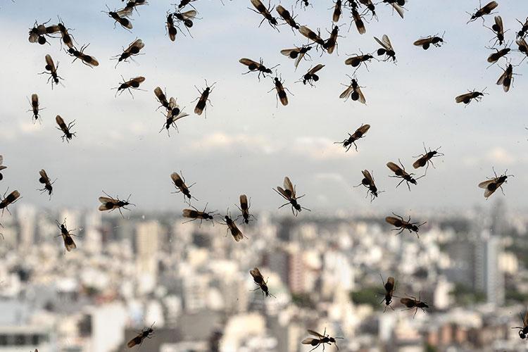 get-rid-of-flying-ants-swarm