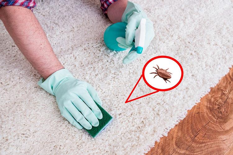 ways-get-rid-carpet-beetles-featured-image