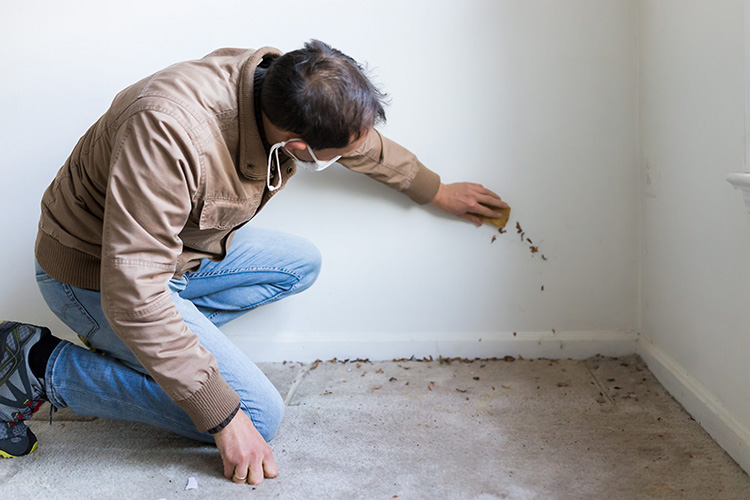 ways-get-rid-carpet-beetles-man-cleaning-the-wall