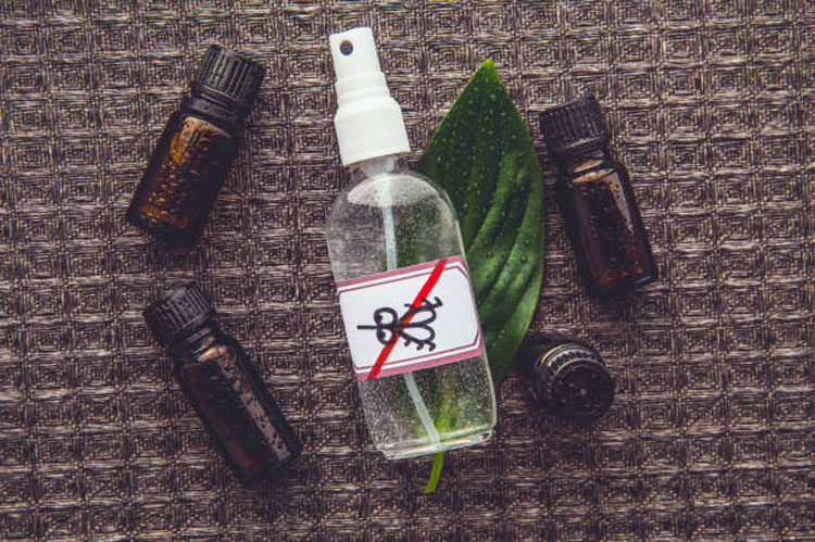 how-to-get-rid-gnats-repellant-spray