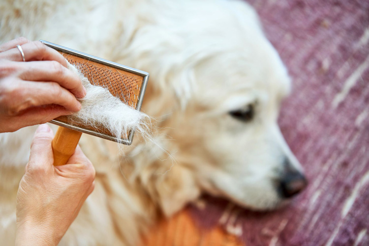 how often change furnace filter pet hair