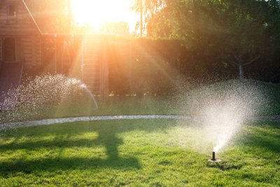 how to get rid chinch bugs lawn irrigation