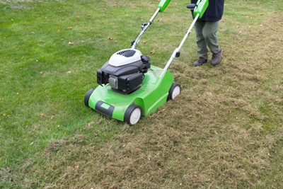 how to get rid chinch bugs remove thatch