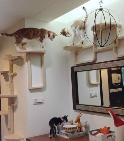 the ultimate diy cat tree cut and wall mounted stool cat tree