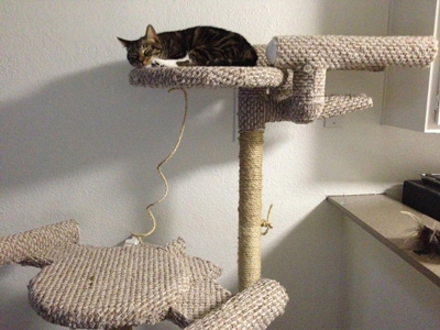 the ultimate diy cat tree diy star trek themed cat tree